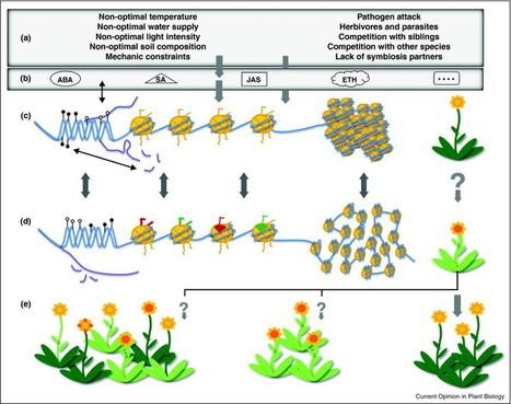 Epigenetic responses to stress: triple defense? | Plant pathogen | Scoop.it