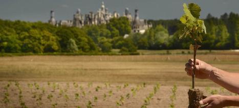 Chambord cherche des mécènes pour ses vignes | Le vin quotidien | Scoop.it