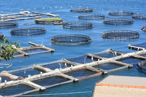 EUROPEAN UNION: Aquaculture | Aquaculture and Fisheries - World Briefing | Scoop.it
