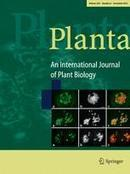 Stimulation of nitrogen removal in the rhizosphere of aquatic duckweed by root exudate components - Online First - Springer | Rhizosphere | Scoop.it