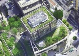 Más techos verdes en las azoteas de Lima ‹ Sientemag | Jardines Verticales y azoteas verdes. | Scoop.it