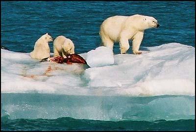 Polar Sea 360º #video #Arte #arctique #inuit #PNO | Arctique et Antarctique | Scoop.it