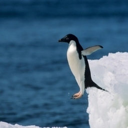 Discovery Kids :: Tell Me - Do all penguins live in cold climates? | Polar animals | Scoop.it