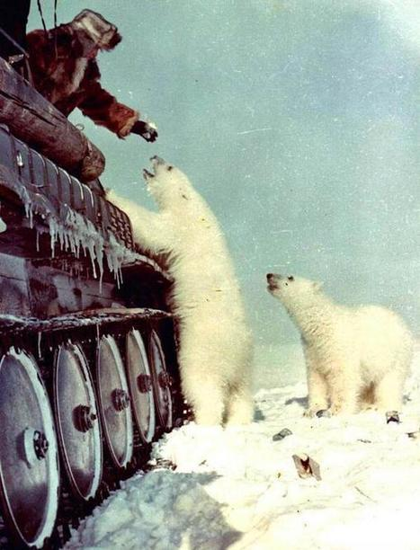Twitter / History_Pics: Feeding polar bears from on ... | Global warming and the extinction of polar bears | Scoop.it