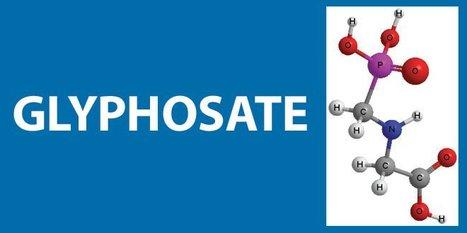#Glyphosate #herbicides again implicated in kidney disease in Sri Lankan farm workers | Messenger for mother Earth | Scoop.it