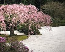 Making A Japanese Garden - Flat Gardens | Japanese Gardens | Scoop.it