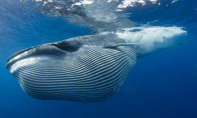SONAR, SEISMIC TESTING AND WHALES ARE A DEADLY MIX: The Acoustic World Beneath The Waves | OUR OCEANS NEED US | Scoop.it