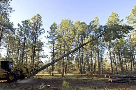 Calpers Puts Portion of Timber Holdings Up for Sale | Risk-Adjusted Returns | Scoop.it