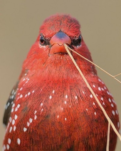 Top 25 Wild Bird Photographs of the Week #53 - National Geographic | Conservation | Scoop.it