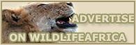 Safari destinations in africa   wildlifeafrica   Scoop.it
