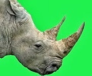 NATURE: WHAT IS RHINO HORN?   nature   Scoop.it
