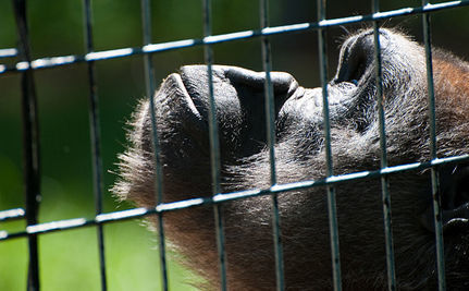 Miserable Indoor Zoo in Bangkok Sparks Controversy | Nature Animals humankind | Scoop.it