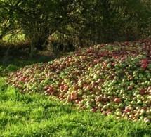 l'Orne vous invite à croquer la pomme   Pomarium   Scoop.it