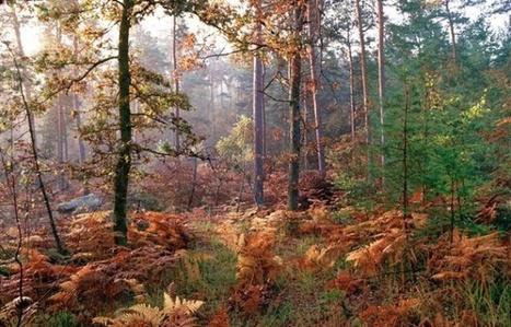 Dégazage au-dessus de Fontainebleau: Des impacts encore incertains sur la forêt | Biodiversité | Scoop.it
