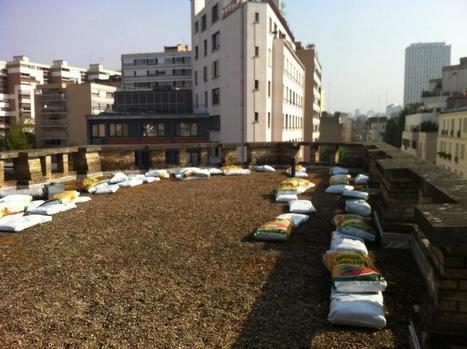 Installation d'un potager sur le toit terrasse du collège Matisse à Paris | Agriculture Urbaine | Scoop.it