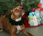 Bunny's Blog: Angel Trees Help Homeless Pets at More than 50 Shelters | Pet News | Scoop.it