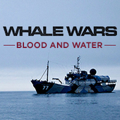 Whale Wars: Blood and Water | Digital Ethnography | Scoop.it