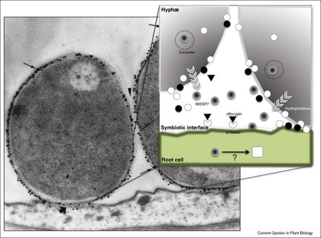 Harnessing ectomycorrhizal genomics for ecological insights | Plant Science | Scoop.it