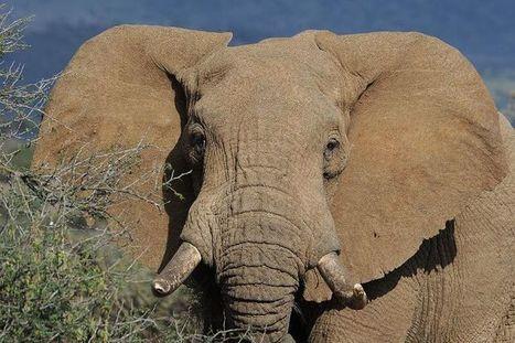 Le trafic d'espèces protégées: menace pour la biodiversité et pour les Etats | Chronique d'un pays où il ne se passe rien... ou presque ! | Scoop.it