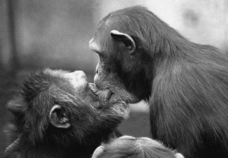 Dutch scientist argues that animals show morality, too | Senior project | Scoop.it
