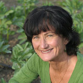 Your Nutrition and the Environment - Santa Barbara Independent | Chico Aquaponics | Scoop.it