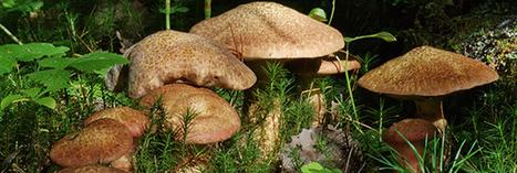 Savoir utiliser les mycorhizes pour votre jardin | Chimie verte et agroécologie | Scoop.it