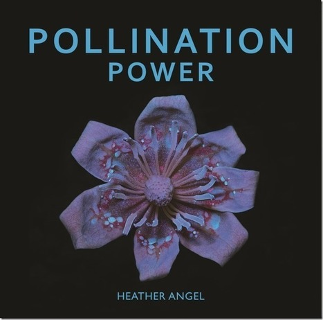 Pollination Power Book Review by Heather Angel | MyPhotoSchool Blog | Photography Tips & Tutorials | Scoop.it