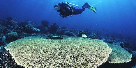 «Tara» au cœur des coraux du Pacifique | Biodiversité | Scoop.it