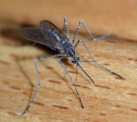 Ohio Confirms Two Cases of West Nile Virus | 1370 WSPD | Gutters-Toledo | Scoop.it