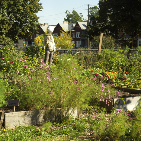 Situated Urban Research : Urban Agriculture | Detroit | Scoop.it