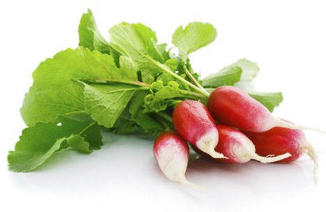 Radish Benefits, Radish Plant Uses, Suppliers, Exporters | Agro Products | Scoop.it