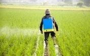 Le Roundup de Monsanto, lié à la stérilité, trouvé dans tous les échantillons d'urine analysés | Sécurité sanitaire des aliments | Scoop.it