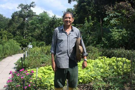 À Singapour, des herbes médicinales gratuites pour les malades et les pauvres | Nouveaux paradigmes | Scoop.it