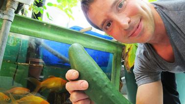 Jardin urbain engraissé aux excréments de poissons | Agriculture des villes | Scoop.it