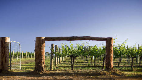 The return of a founding vintner marks a major milestone for one of Australia's best wineries. | Vitabella Wine Daily Gossip | Scoop.it