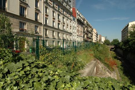 Paris débat de l'avenir de la Petite Ceinture | biodiversité en milieu urbain | Scoop.it