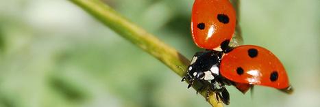 Lutte biologique : les petites bêtes et insectes utiles à votre jardin | planter des bulbes | Scoop.it
