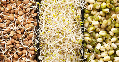 10 Reasons Eating Sprouts Should Be a Part of Your Daily Diet | zestful living | Scoop.it