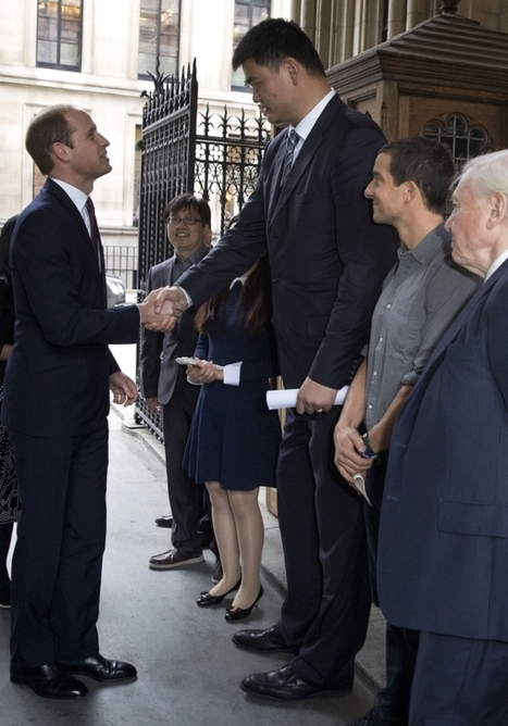 Prince William tells Chinese 'elephants will be extinct by the time Princess Charlotte is 25' unless they act now   Society and behaviour   Scoop.it