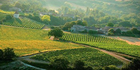 Œnotourisme. Plongez au cœur des vignes pendant les vendanges, autour de Toulouse | Haute-Garonne tourisme | Scoop.it