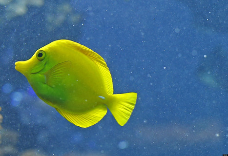 Feeling Stressed? Take A Break To Stare At These 19 Peaceful Photos Of Fish | Pets | Scoop.it