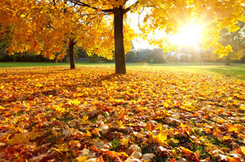 10 Tips for a Healthy Fall | Health and Fitness | Scoop.it