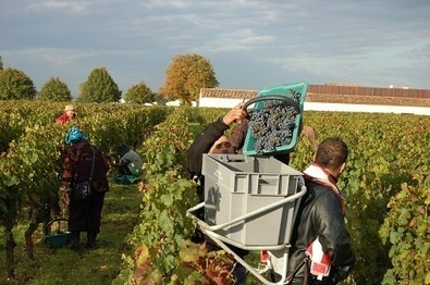 Bordeaux 2013: 'a joyous triumph over adversity' | Vitabella Wine Daily Gossip | Scoop.it