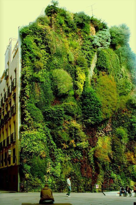 Vertical garden in Madrid, Spain | Harmony Nature | Scoop.it