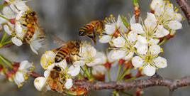 A City Boy on Farming 17 Bees: | Brendan Palmer on Sustainability | Scoop.it
