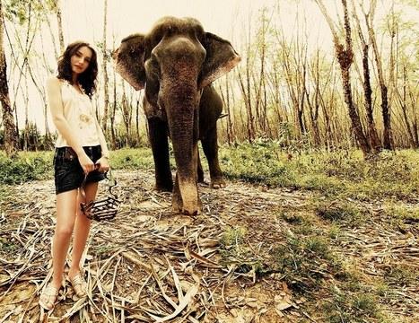 Elephant | Okapy | Scoop.it