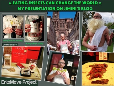 """Eating insects could really change the world"" my presentation on Jimini's blog. 