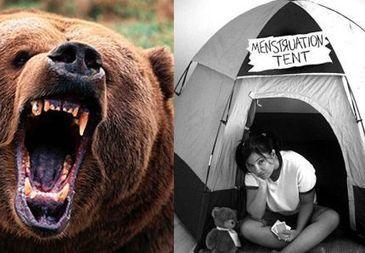 Vos règles, mesdames, les ours bruns s'en tamponnent | Mais n'importe quoi ! | Scoop.it