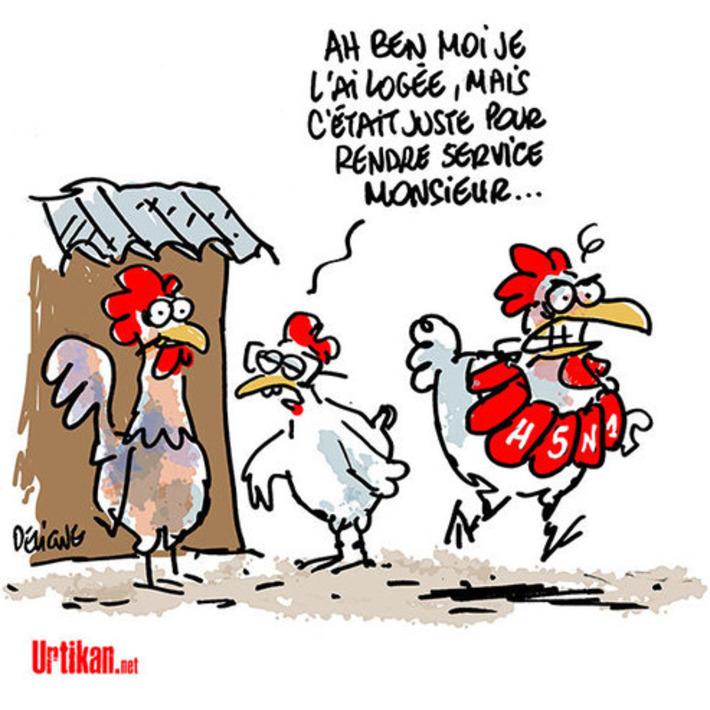 Un cas de grippe aviaire H5N1 découvert en Dordogne | Baie d'humour | Scoop.it