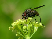 Observe Plants and Animals | USA National Phenology Network | Plant Pest Modeling | Scoop.it